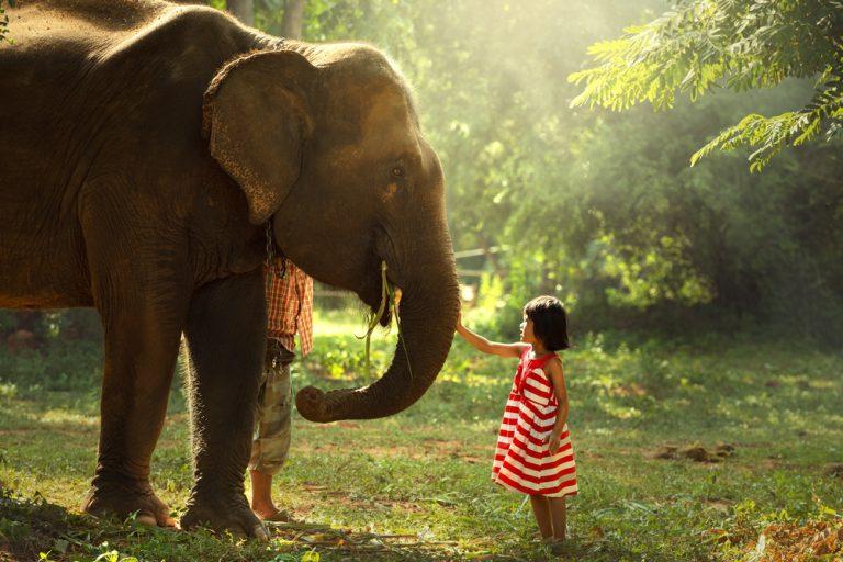 Als Zoonose bezeichnet man eine Infektion, die von Tier auf Mensch bzw. umgekehrt von Mensch auf Tier übertragen wird.